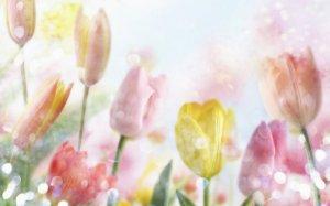 Tulips'n'Dew