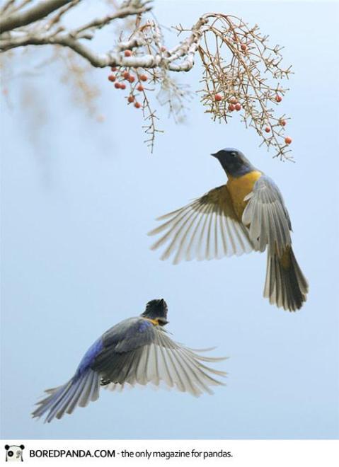 John-Fish-Birds-16