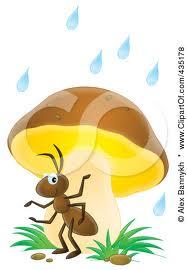 ants in rain