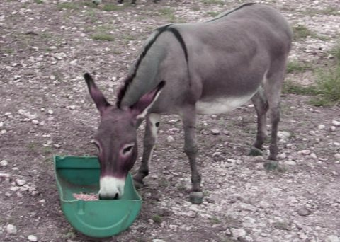 donkey_cross