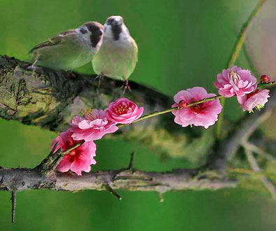 2006-3-11-bird-flower
