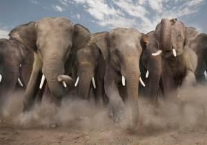 elephantpicture (1)