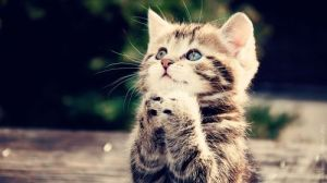cat prayering