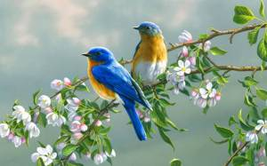 45523-beautiful-birds-birds-in-love